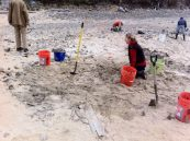Flowering rush pull at Dog Beach