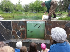 Viewing pond on spring field trip to WaterLife Discovery Center