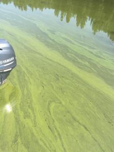 Blue-green algae bloom Hayden Lake 2015
